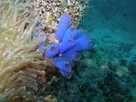 Blaue Seescheide